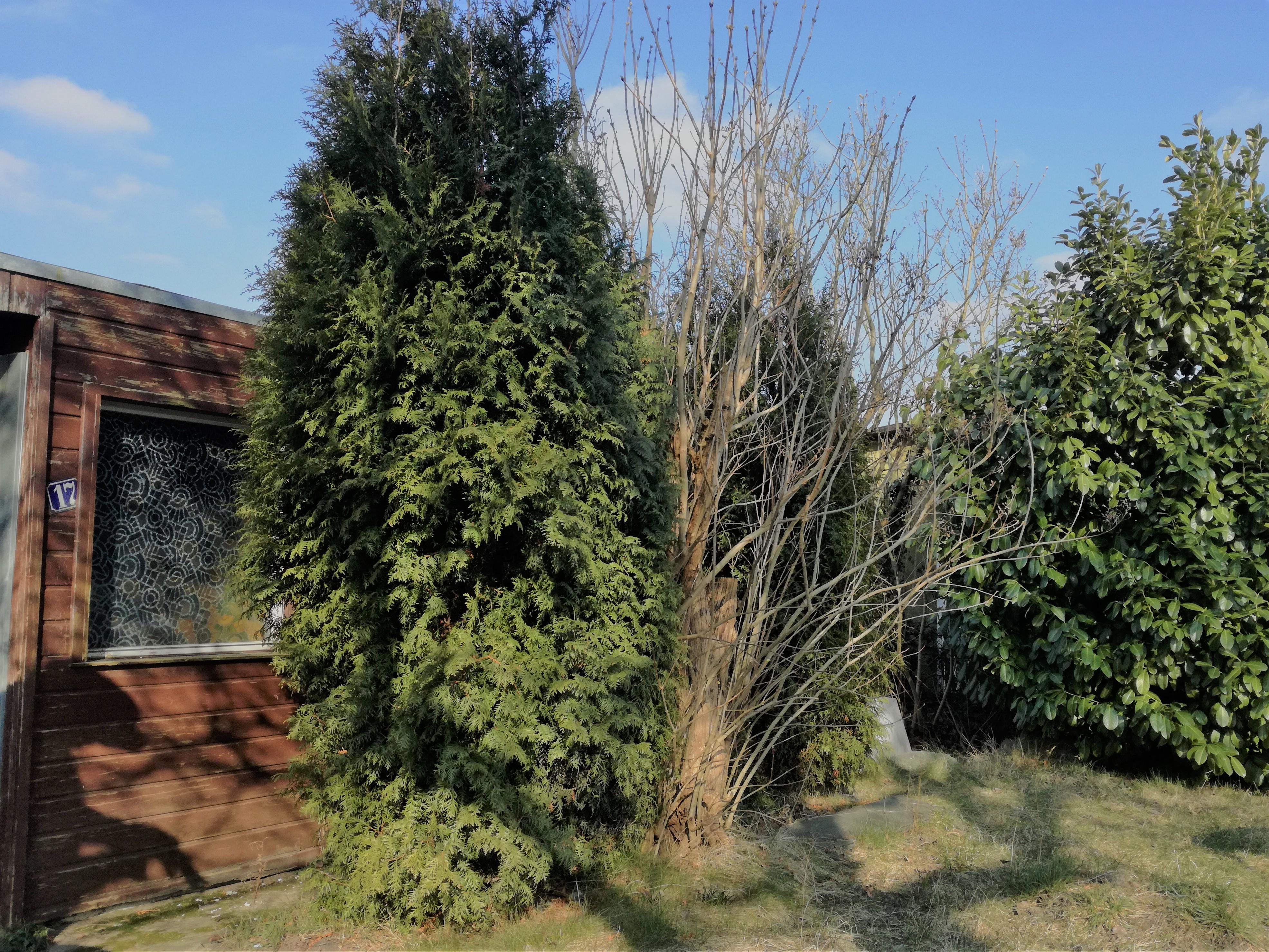 Korniferen Garten