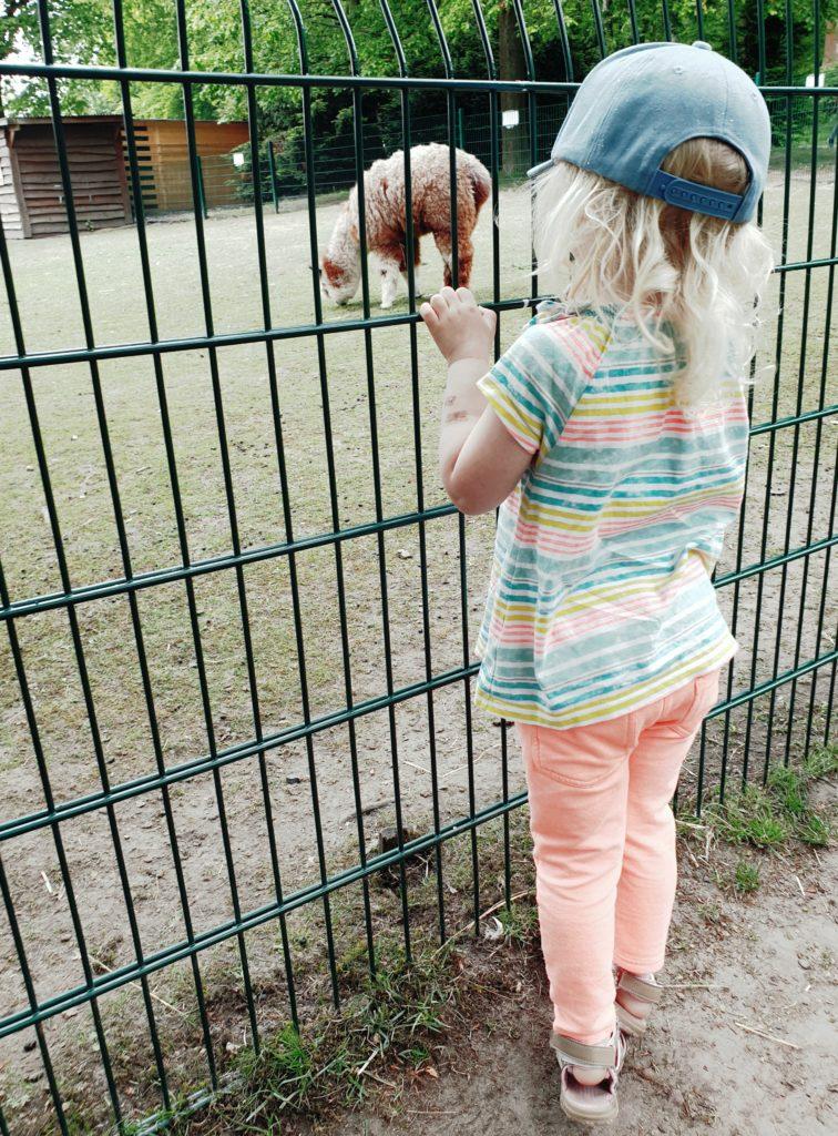 SONNTAG Alpakas im Gysenbergpark