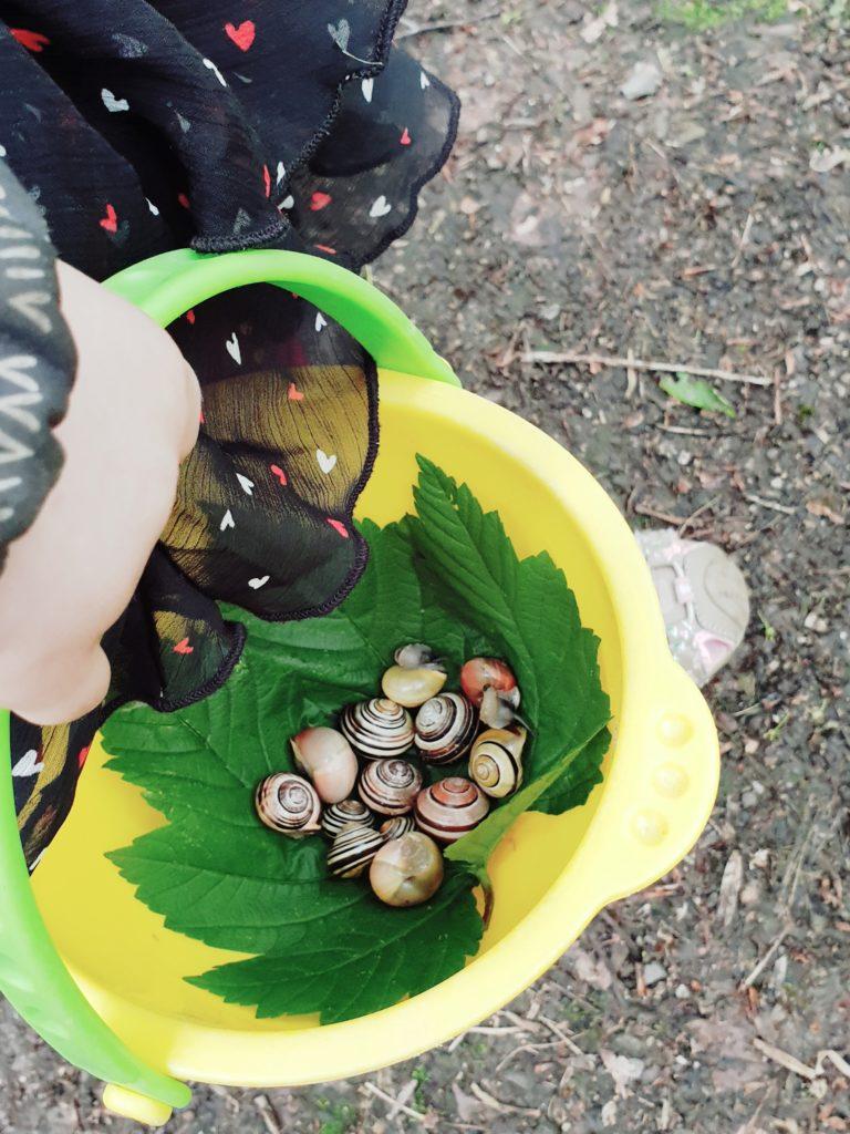 Lernimpuls: Schnecken Zählen in der Natur