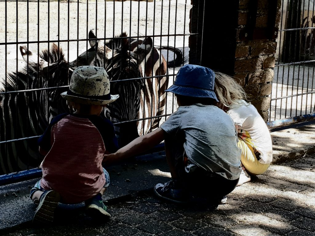 Zebras füttern im Tierpark
