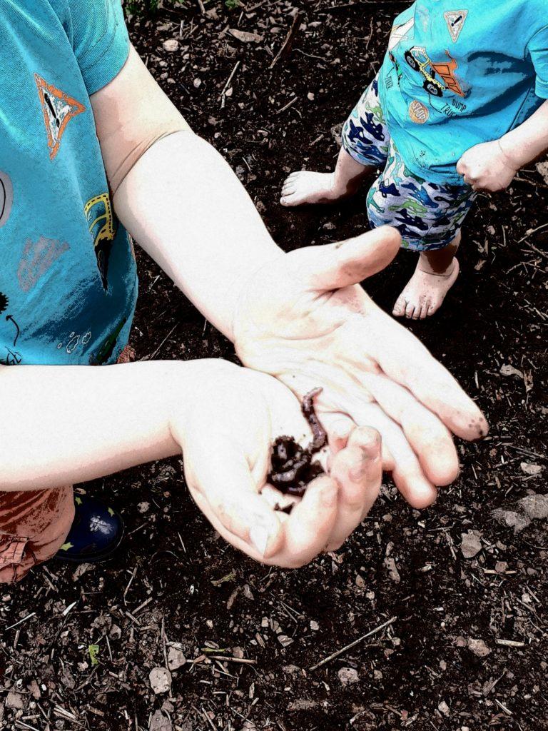 Würmer aus dem Garten