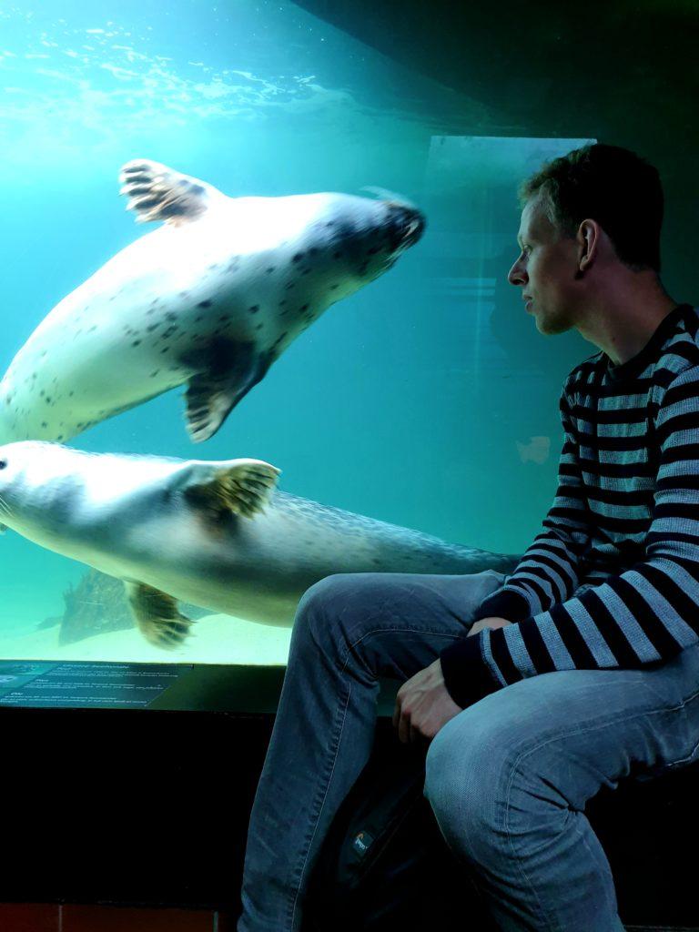 Robben im Aquarium in Wilhelmshaven