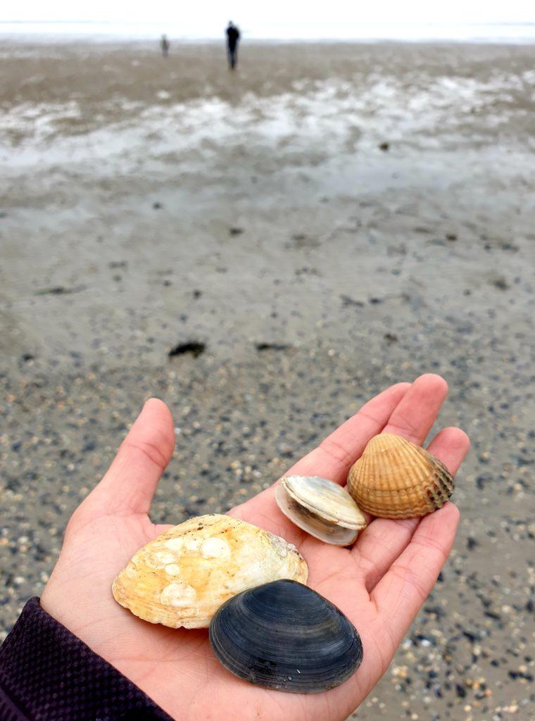 Nordseeurlaub - Muschel sammeln