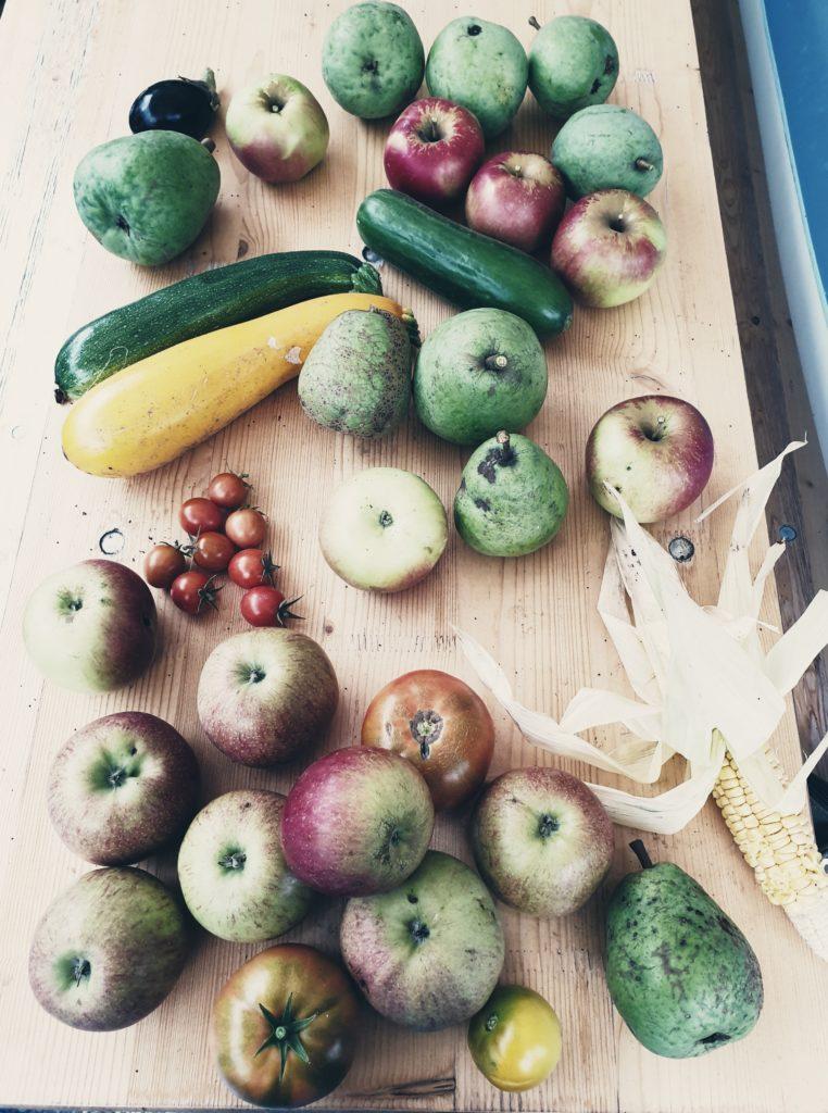 Gartenernte: Zucchini, Gurke, Tomaten, Aubergine, Mais, Äpfel, Birnen