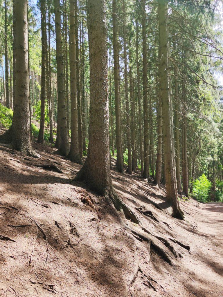 Wald Hattingen Felderbach